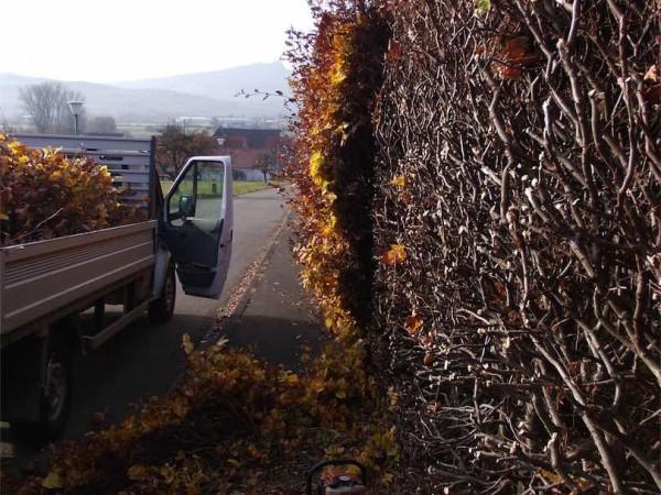 Gartenpflege - Heckenschnitt